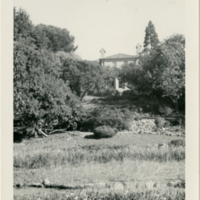 Blake Garden: House from Garden
