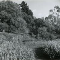 Blake Garden, Lower slope 2