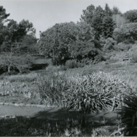 Blake Garden, Iris beds 2
