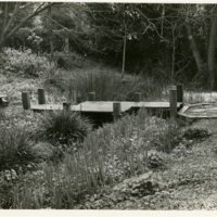 Blake Garden: Japanese bridge