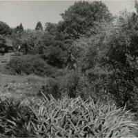 Blake Garden, Lower slope 1