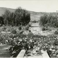 Blake Garden, Rose Garden 6