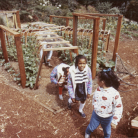 Blake Garden, Children's Adventure Garden