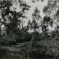 Blake Garden, Lookout point 3