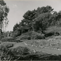 Blake Garden, Iris beds 1