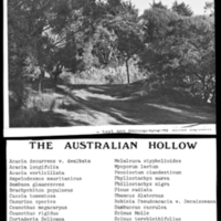 "Blake Garden: ""Plants of the Blake Garden"", The Australian Hollow"