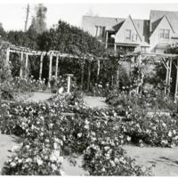 Blake Garden, Rose Garden 5